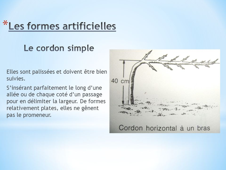 Les formes artificielles Le cordon simple