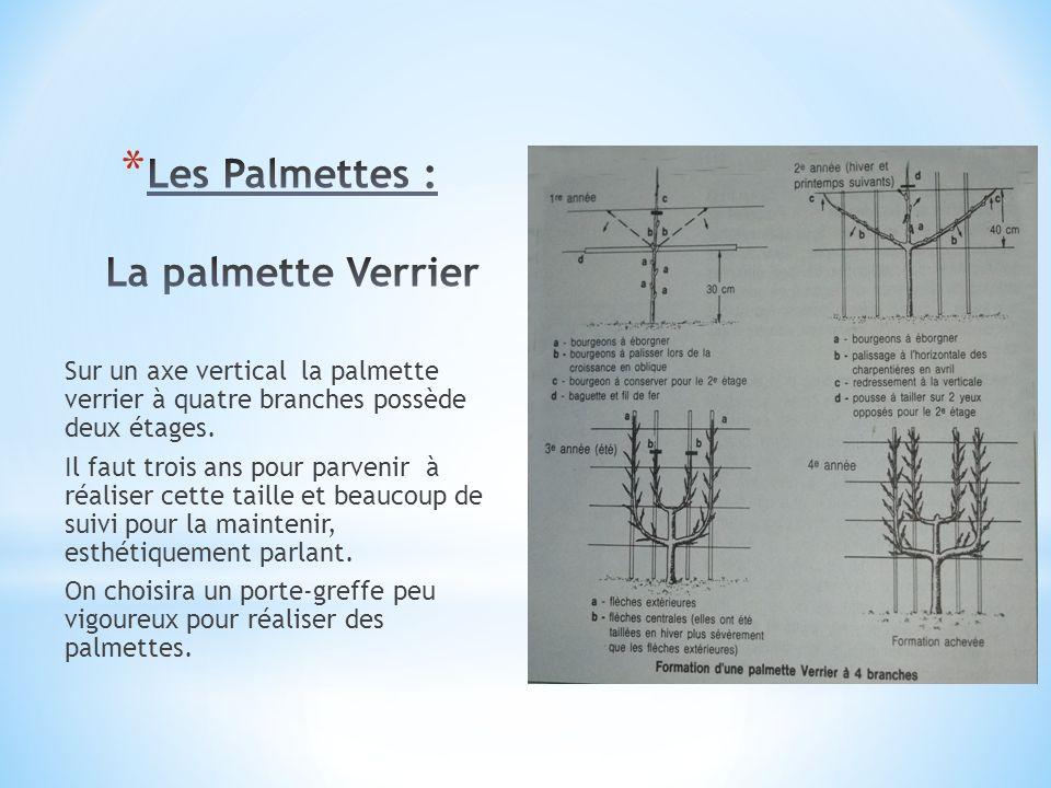 Les Palmettes : La palmette Verrier