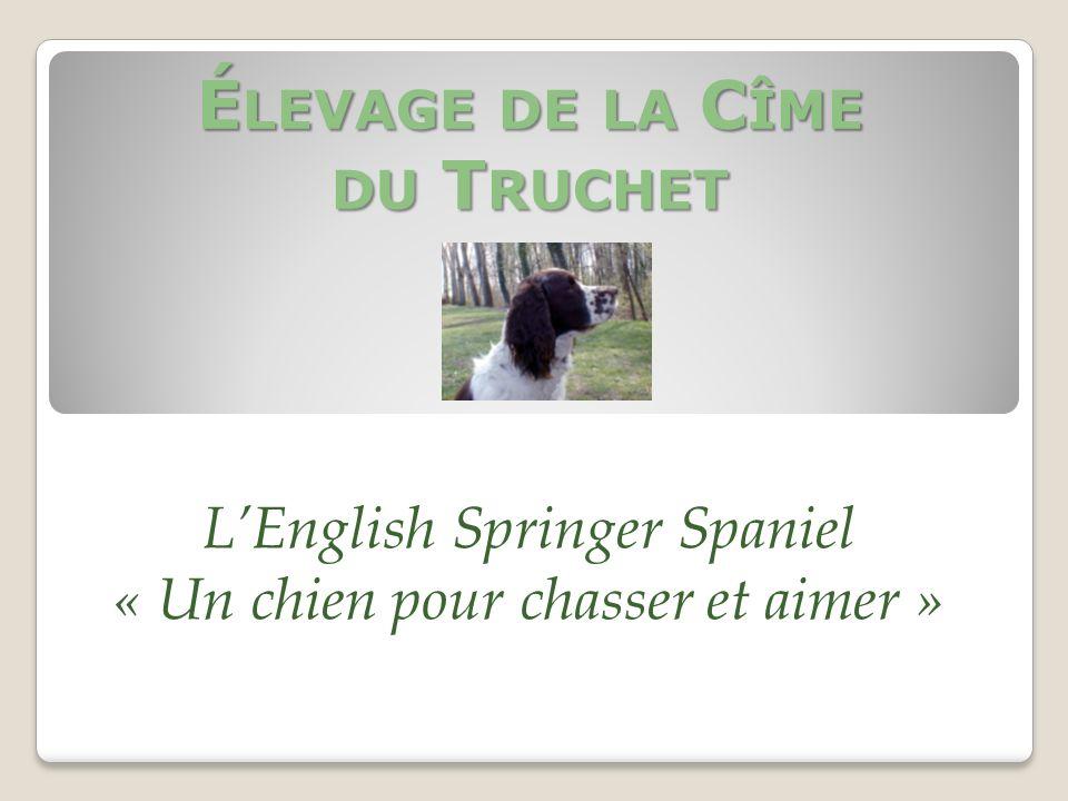 Élevage de la Cîme du Truchet