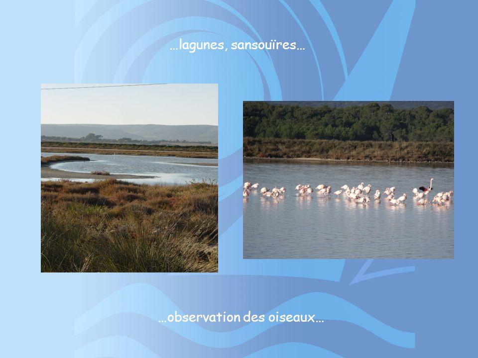 …observation des oiseaux…