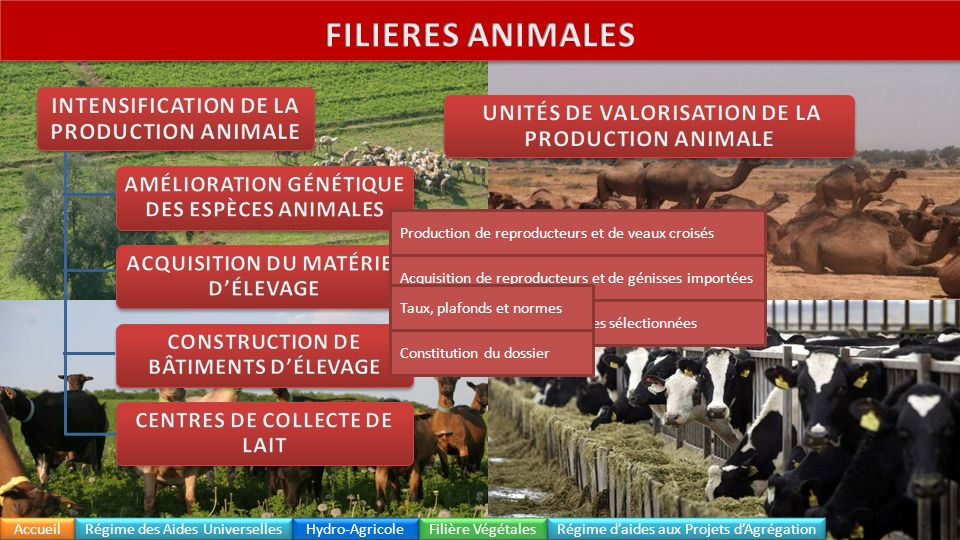 Intensification de la production animale