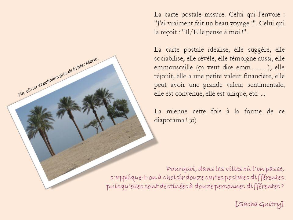 Pin, olivier et palmiers près de la Mer Morte.