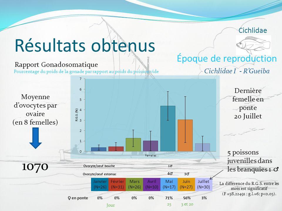 Résultats obtenus 1070 Époque de reproduction Cichlidae