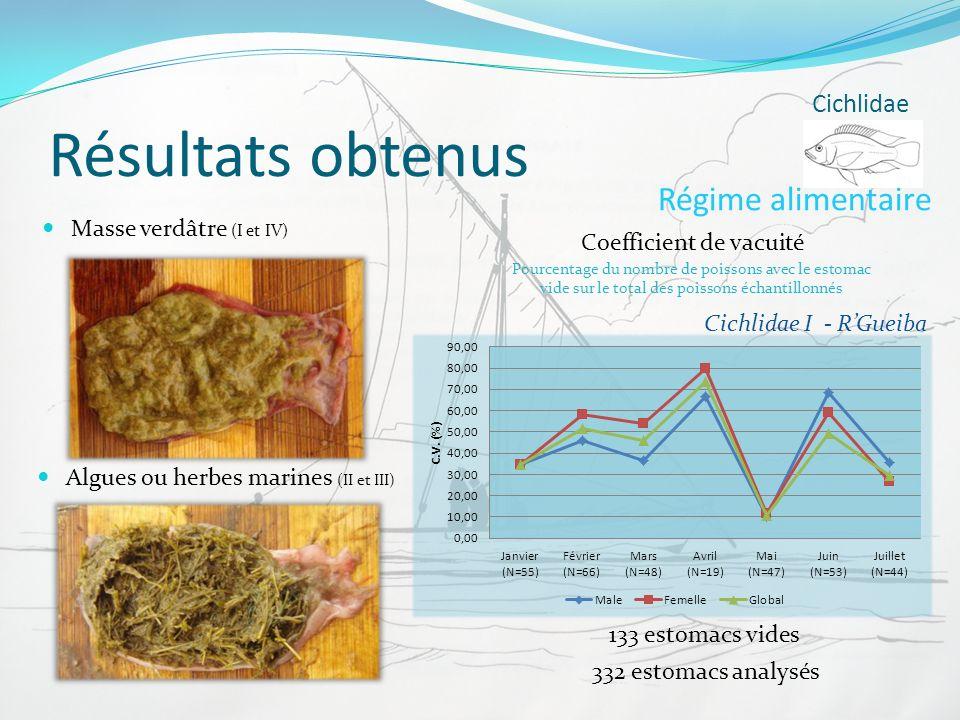 Résultats obtenus Régime alimentaire Cichlidae