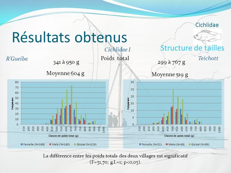 Résultats obtenus Structure de tailles Cichlidae Cichlidae I R'Gueiba