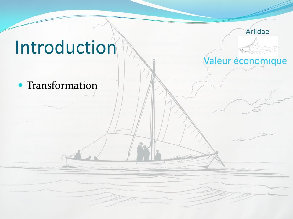 Introduction Ariidae Valeur économique Transformation
