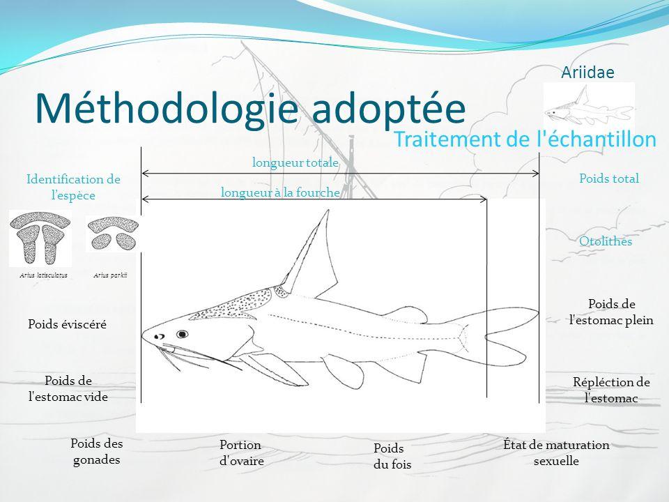 Méthodologie adoptée Traitement de l échantillon Ariidae