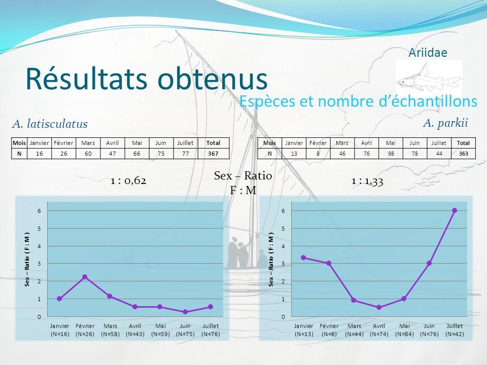 Résultats obtenus Espèces et nombre d'échantillons Ariidae