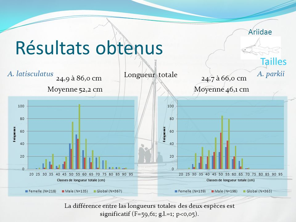 Résultats obtenus Tailles Ariidae A. latisculatus Longueur totale