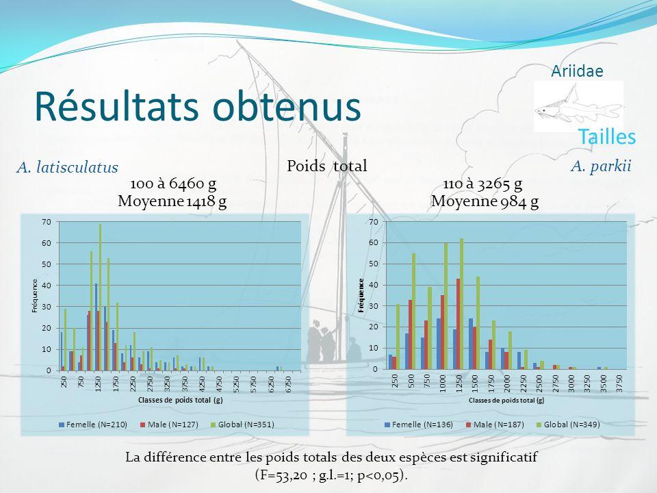 Résultats obtenus Tailles Ariidae A. latisculatus Poids total