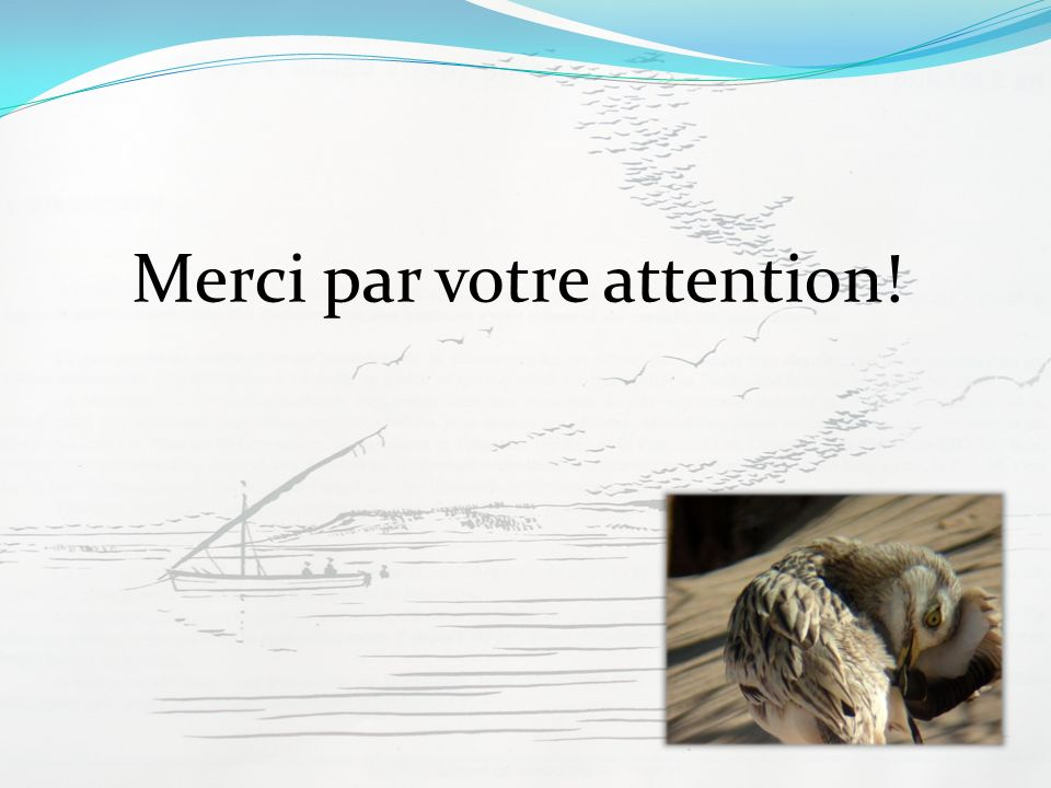 Merci par votre attention!