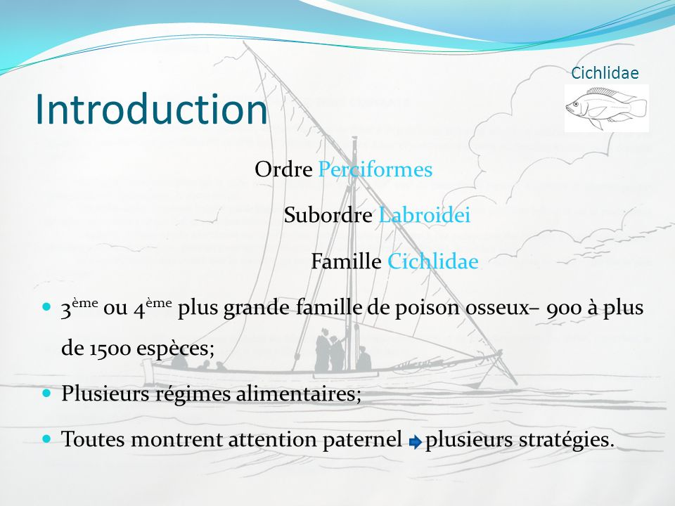 Introduction Ordre Perciformes Subordre Labroidei Famille Cichlidae