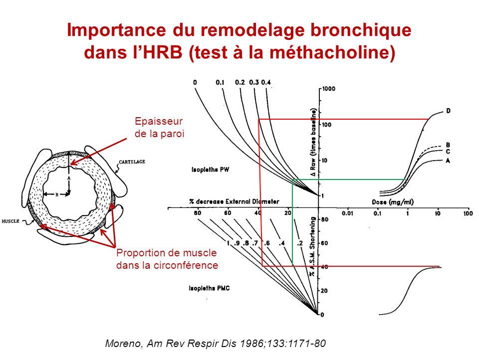 Importance du remodelage bronchique dans l'HRB (test à la méthacholine)