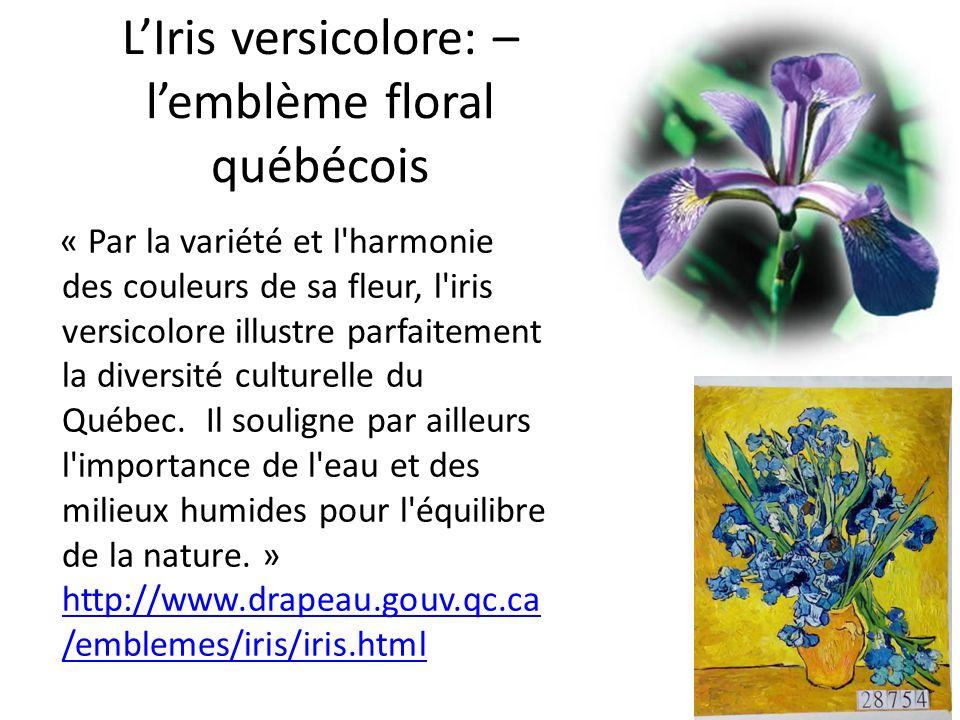L'Iris versicolore: – l'emblème floral québécois