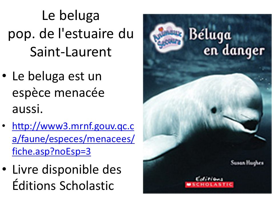 Le beluga pop. de l estuaire du Saint-Laurent
