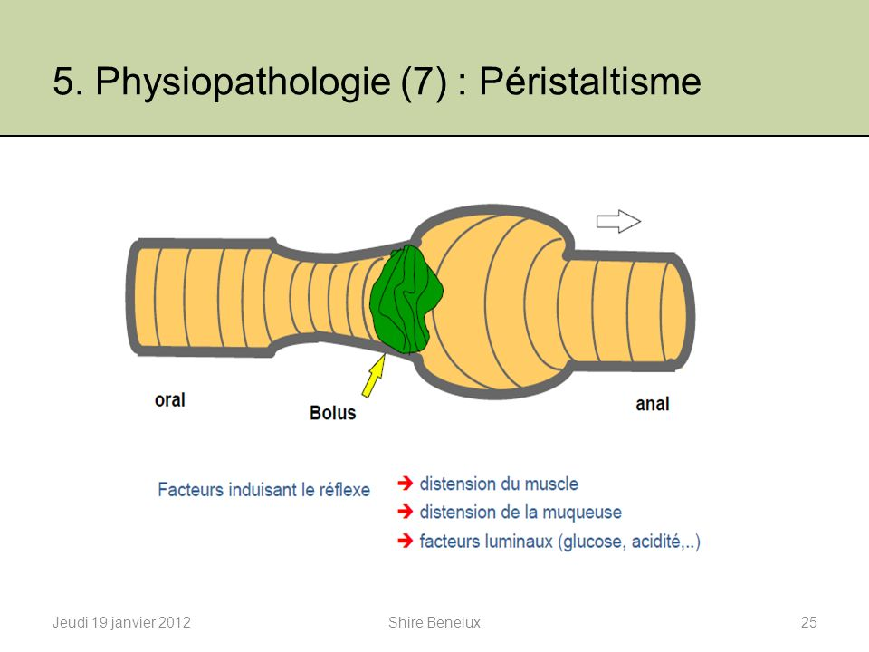 5. Physiopathologie (7) : Péristaltisme