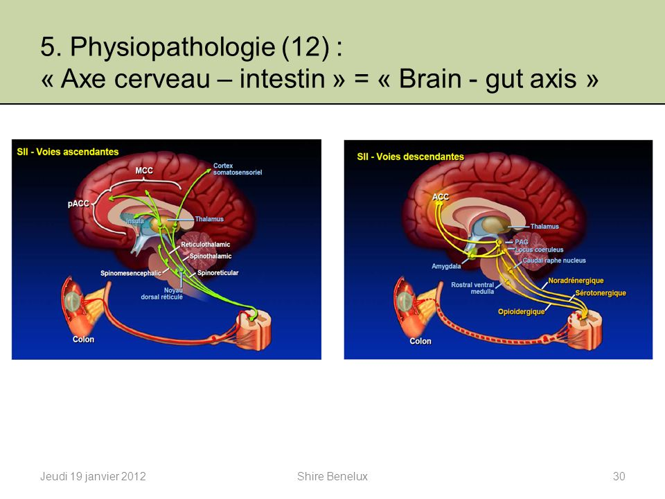 5. Physiopathologie (12) : « Axe cerveau – intestin » = « Brain - gut axis »