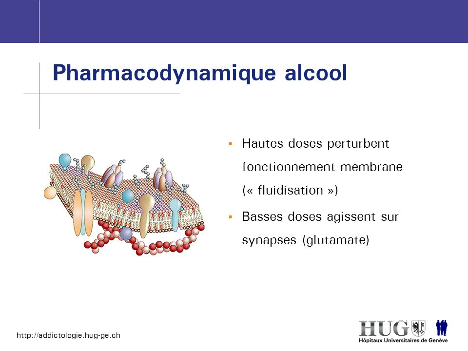 Pharmacodynamique alcool