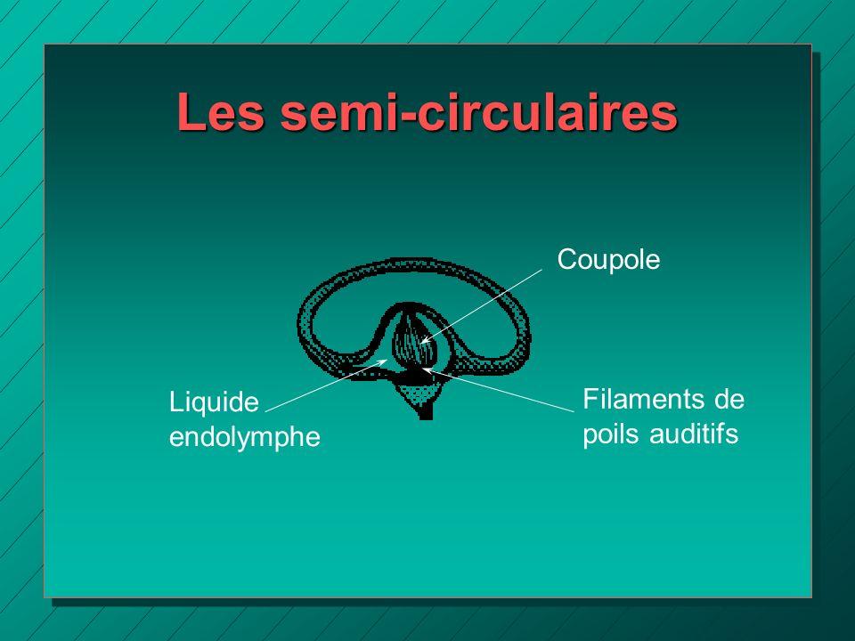 Les semi-circulaires Coupole Filaments de Liquide endolymphe