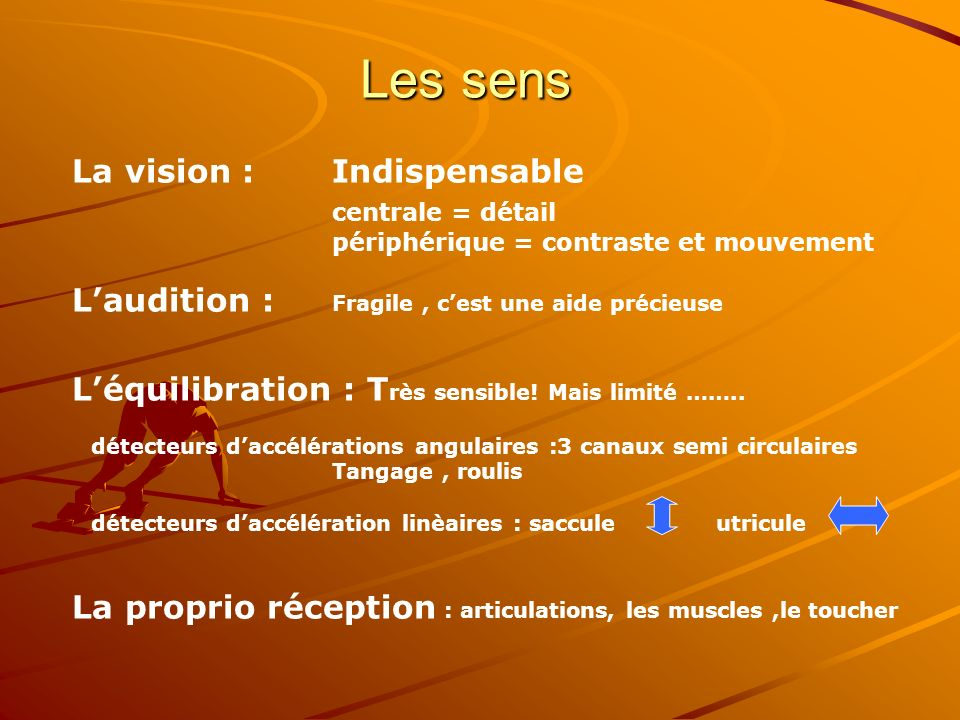 Les sens La vision : Indispensable centrale = détail