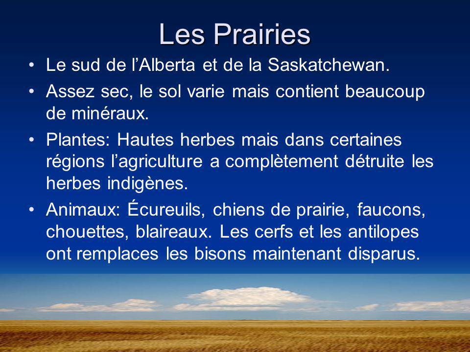 Les Prairies Le sud de l'Alberta et de la Saskatchewan.