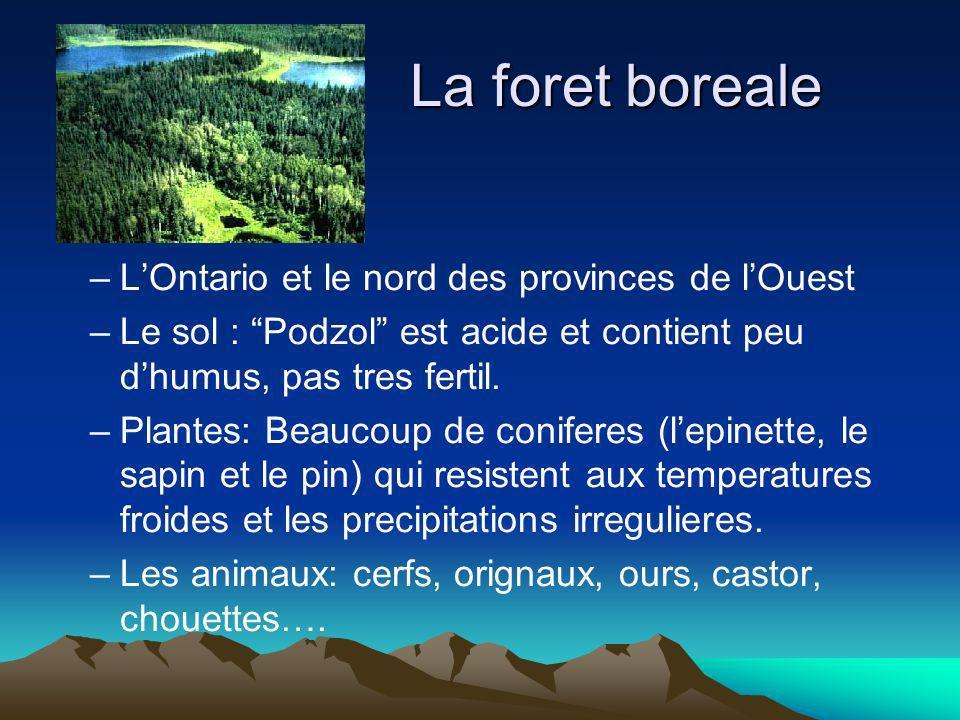 La foret boreale L'Ontario et le nord des provinces de l'Ouest