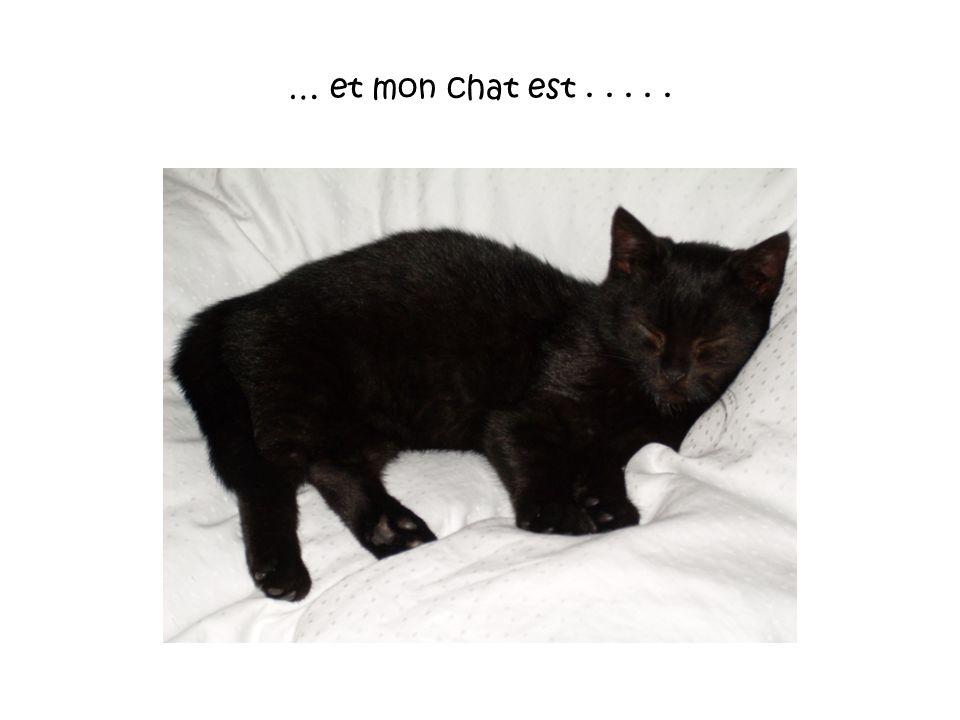 … et mon chat est . . . . .