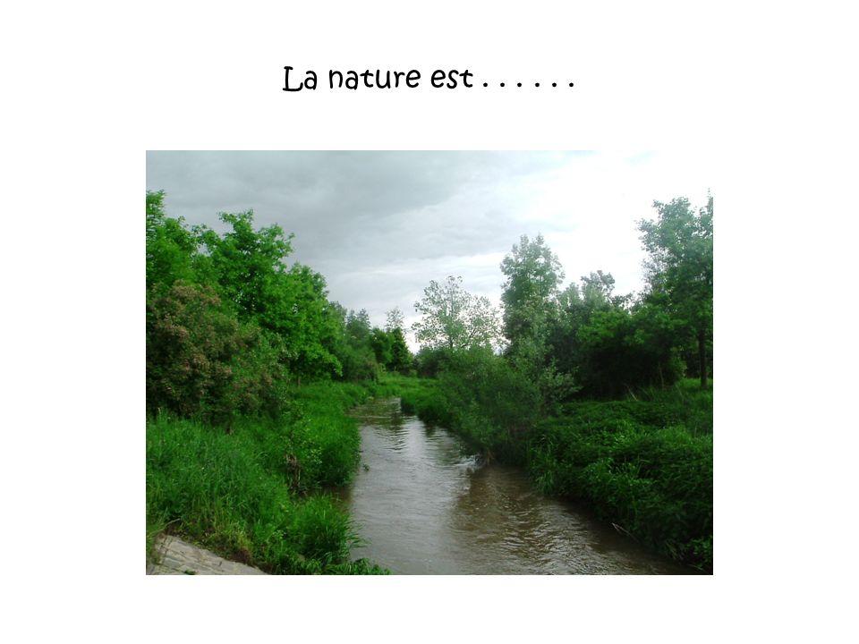 La nature est . . . . . .