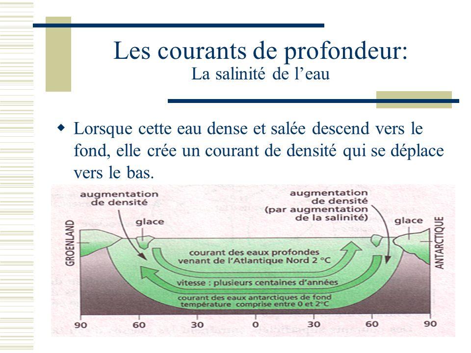 Les courants de profondeur: La salinité de l'eau