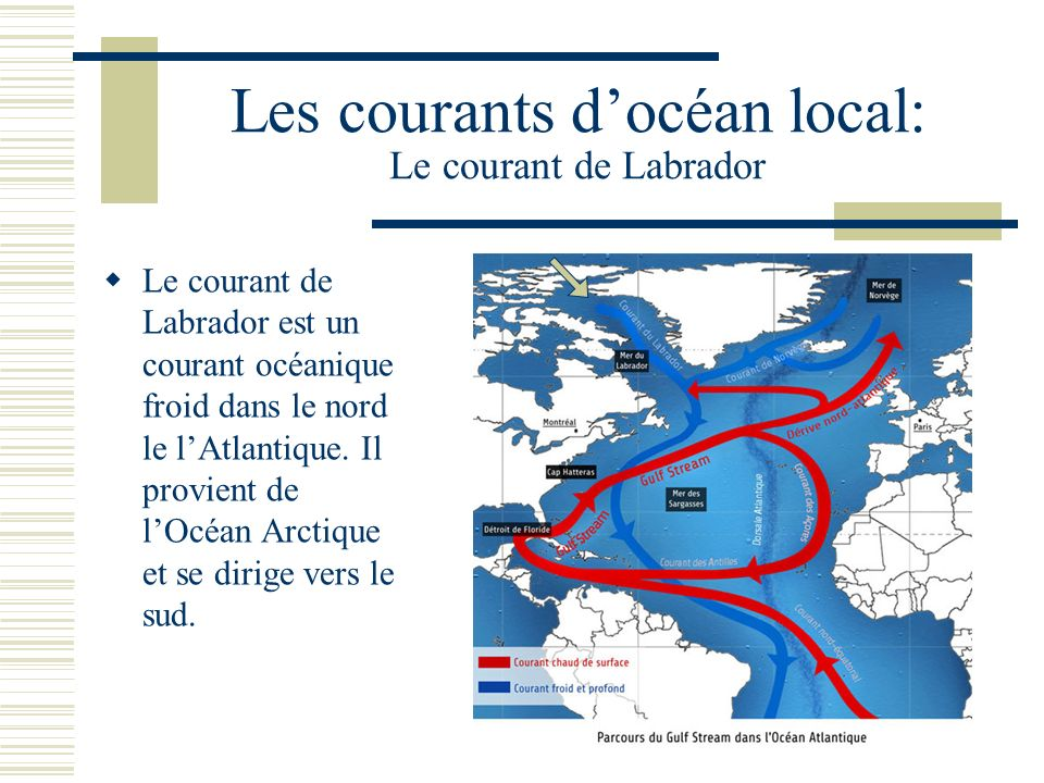 Les courants d'océan local: Le courant de Labrador