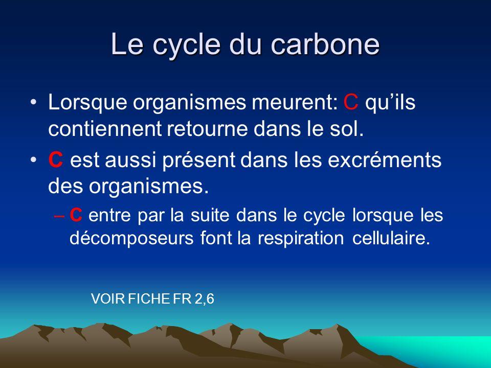 Le cycle du carbone Lorsque organismes meurent: C qu'ils contiennent retourne dans le sol. C est aussi présent dans les excréments des organismes.