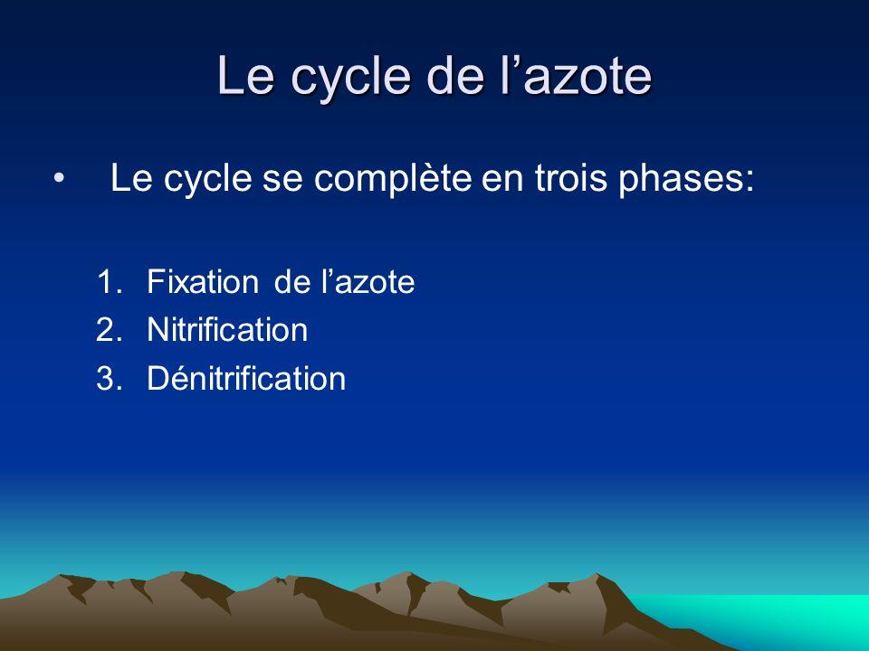 Le cycle de l'azote Le cycle se complète en trois phases: