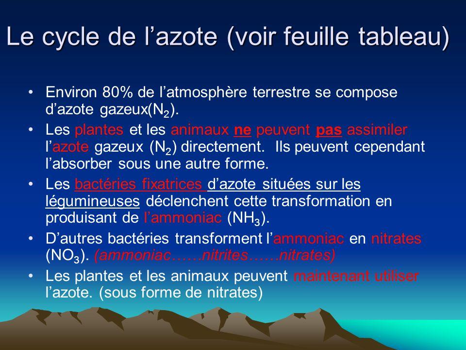 Le cycle de l'azote (voir feuille tableau)