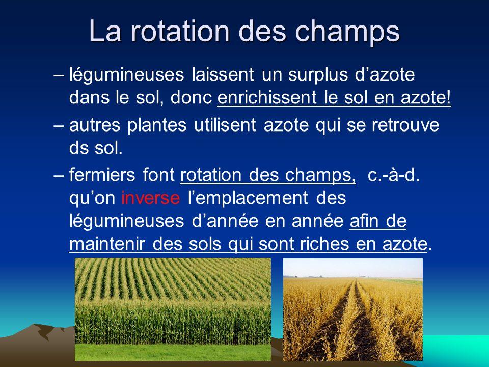 La rotation des champs légumineuses laissent un surplus d'azote dans le sol, donc enrichissent le sol en azote!