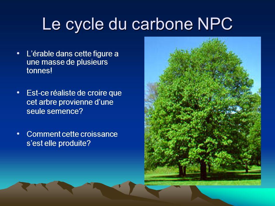 Le cycle du carbone NPC L'érable dans cette figure a une masse de plusieurs tonnes!
