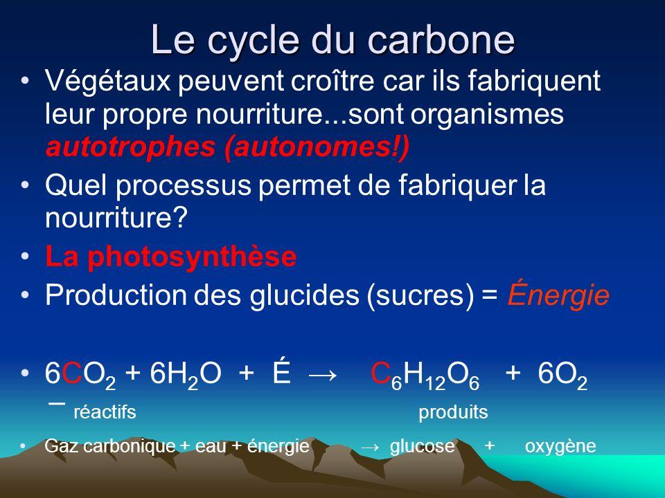 Le cycle du carbone Végétaux peuvent croître car ils fabriquent leur propre nourriture...sont organismes autotrophes (autonomes!)