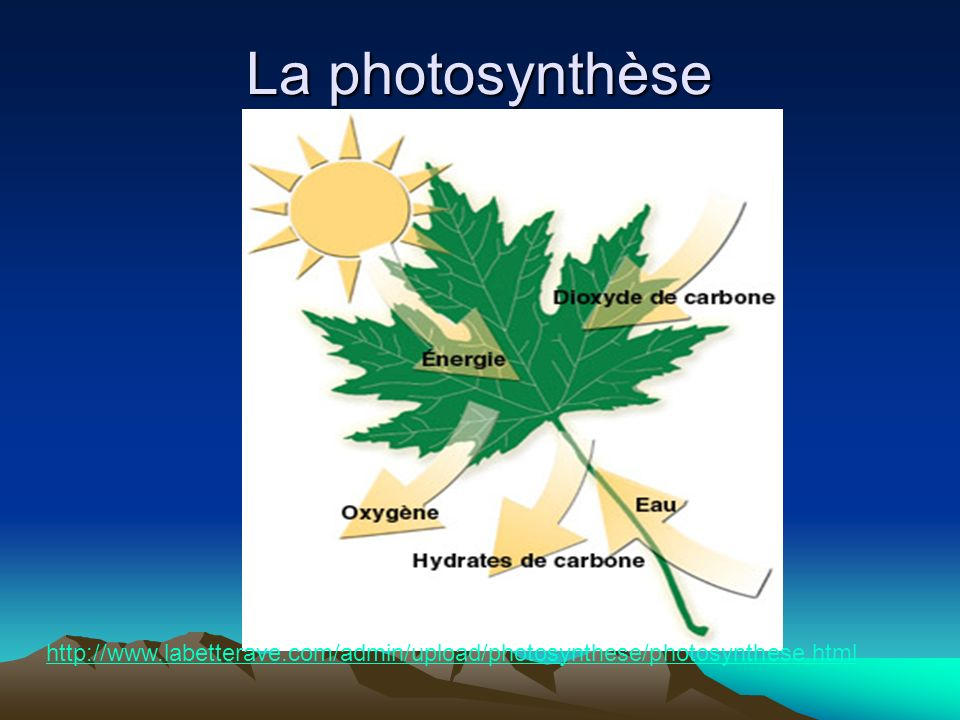 La photosynthèseTrouver video. http://www.labetterave.com/admin/upload/photosynthese/photosynthese.html.