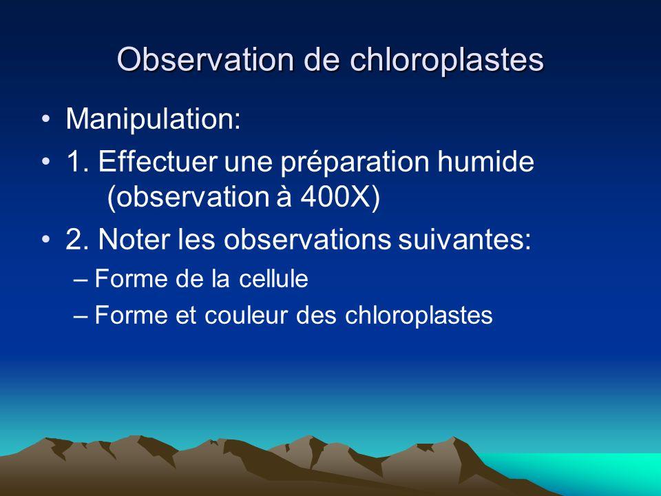 Observation de chloroplastes