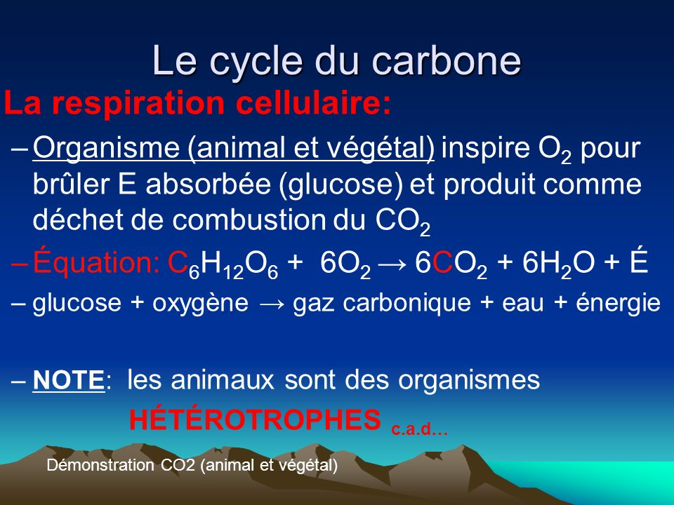 Le cycle du carbone La respiration cellulaire: