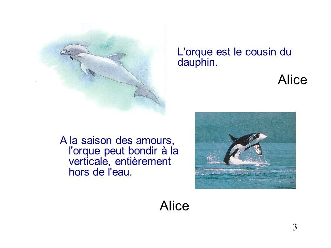 Alice Alice L orque est le cousin du dauphin.