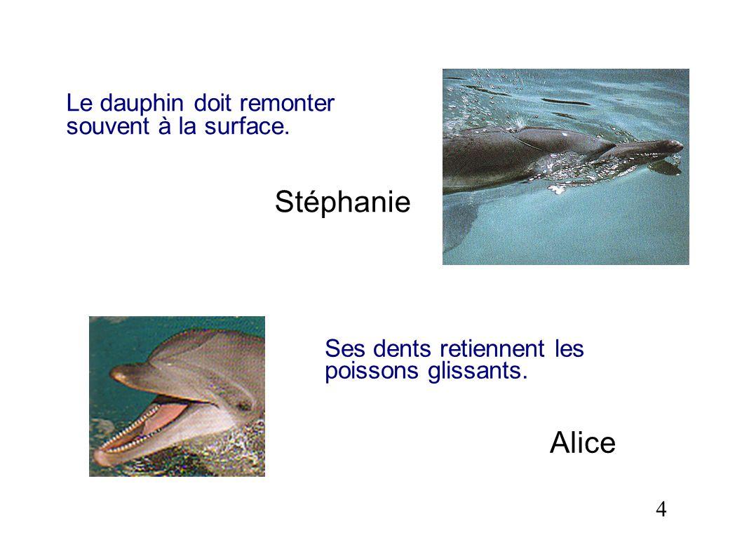 Stéphanie Alice Le dauphin doit remonter souvent à la surface.
