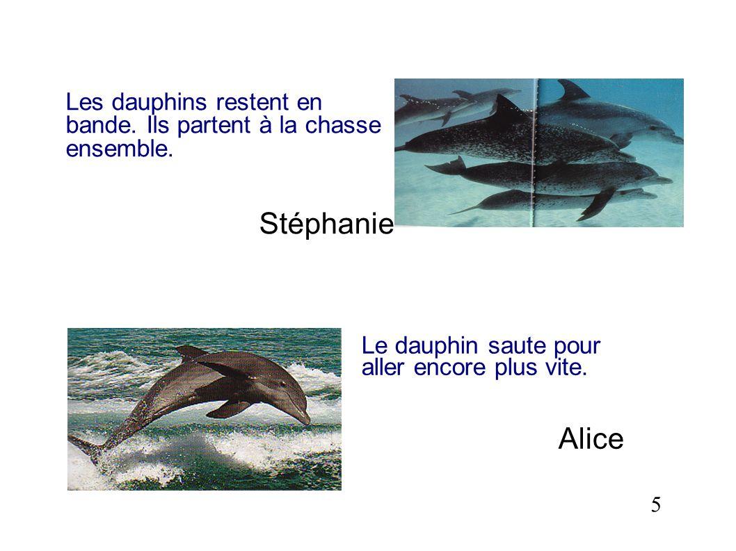 Les dauphins restent en bande. Ils partent à la chasse ensemble.