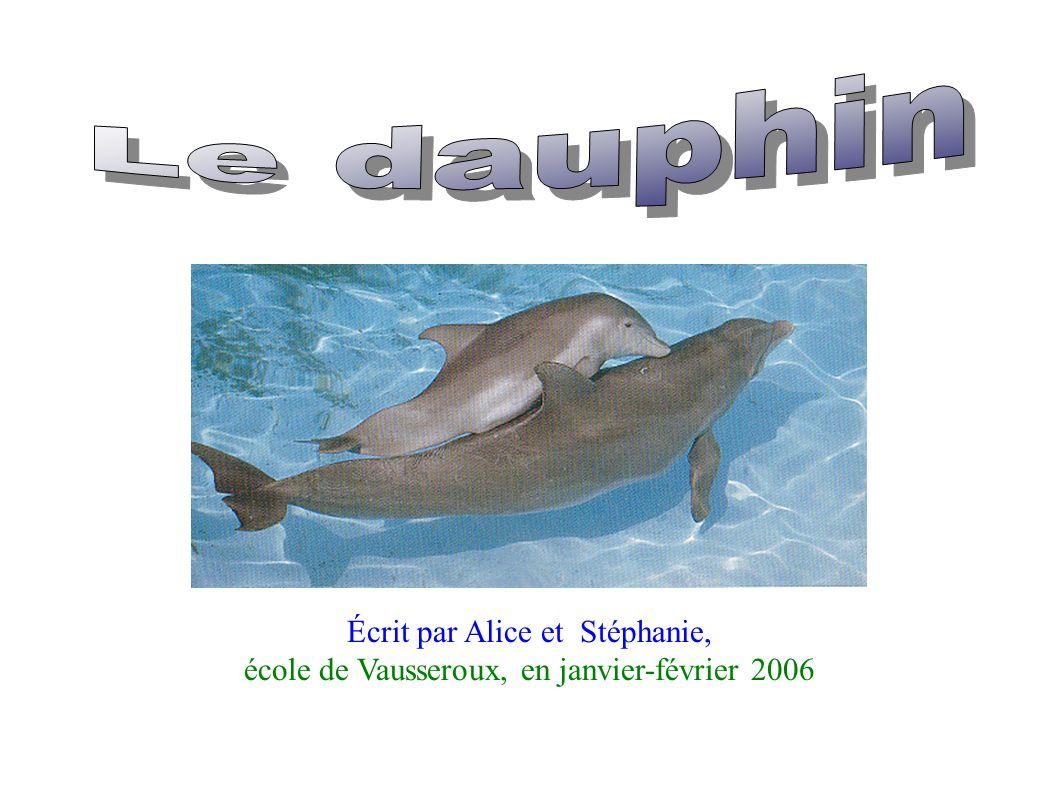 Le dauphin Écrit par Alice et Stéphanie,