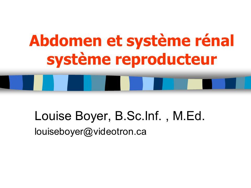 Abdomen et système rénal système reproducteur