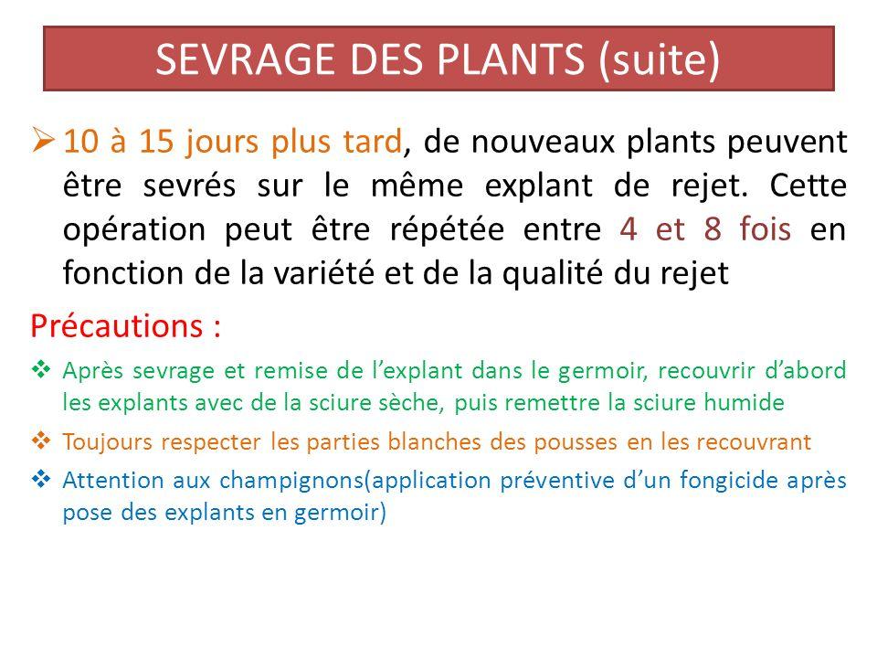 SEVRAGE DES PLANTS (suite)