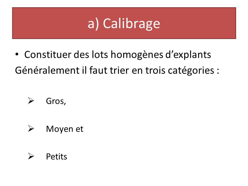 a) Calibrage Constituer des lots homogènes d'explants