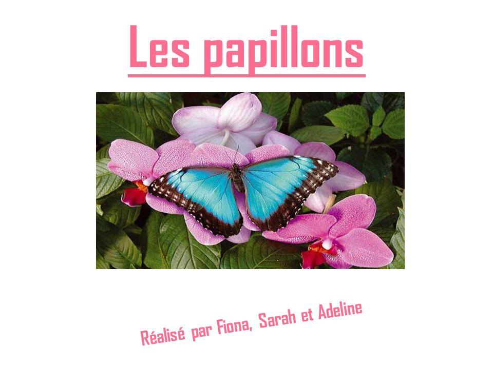 Les papillons Réalisé par Fiona, Sarah et Adeline