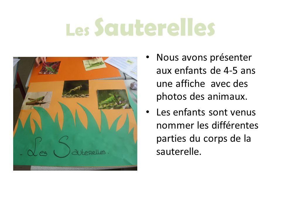 Les Sauterelles Nous avons présenter aux enfants de 4-5 ans une affiche avec des photos des animaux.