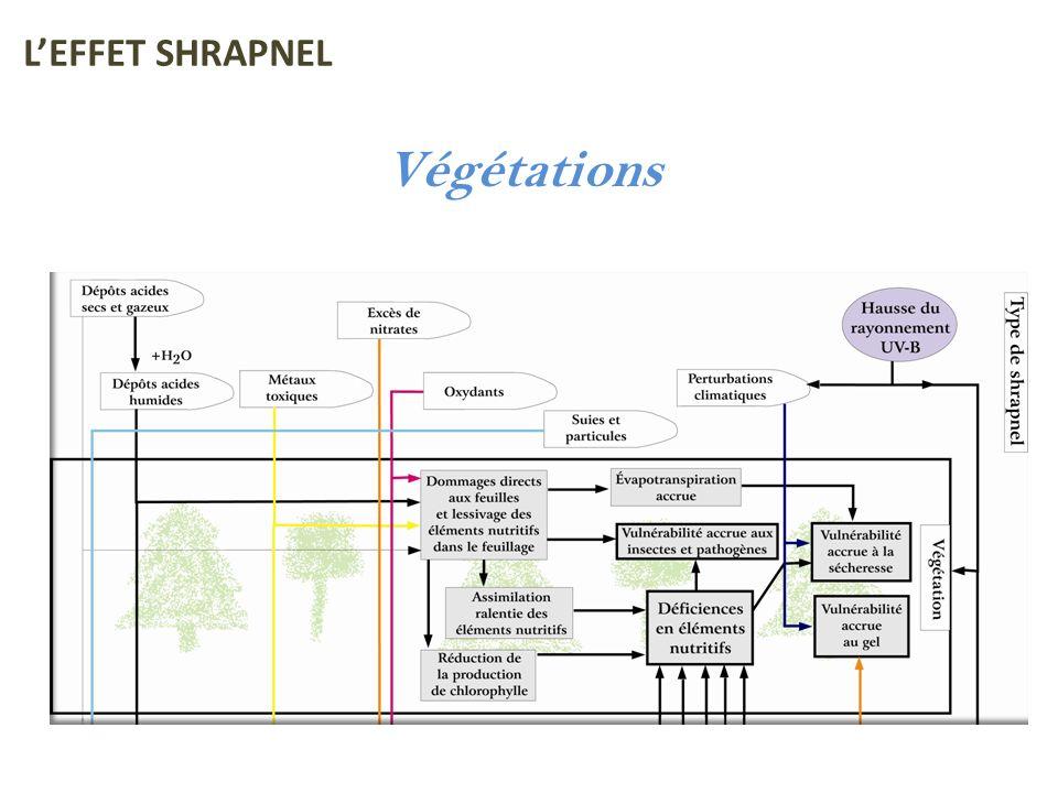L'EFFET SHRAPNEL Végétations
