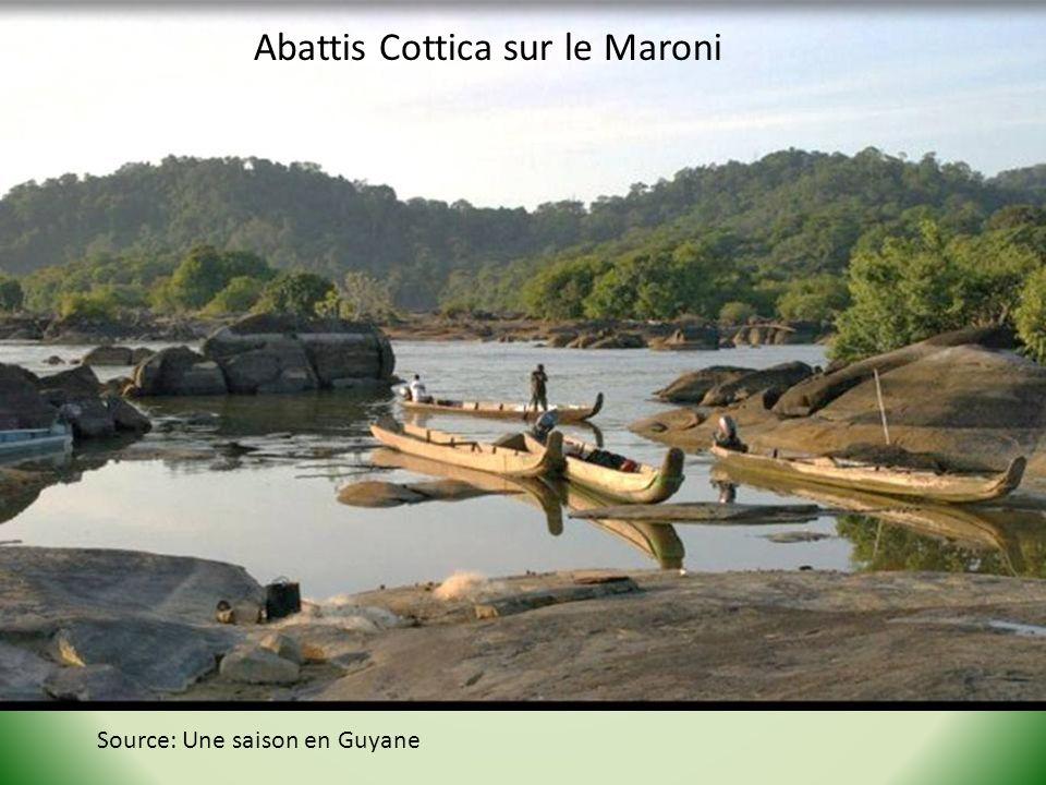 Abattis Cottica sur le Maroni